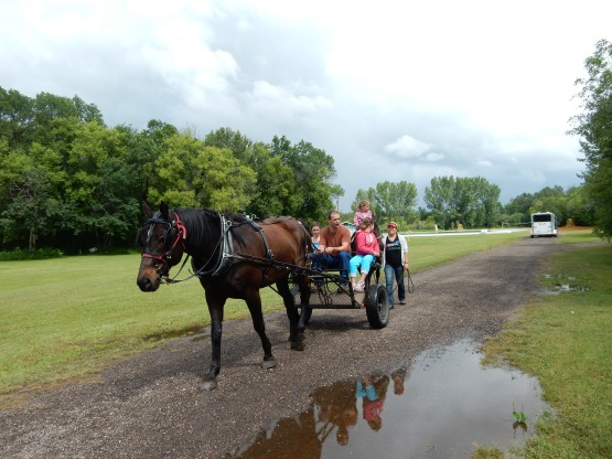 Horse Cart Rides